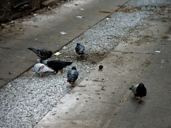 ...and were joined by a sixth pigeon.  Funny, not a crumb of Dim Sum was to be found!