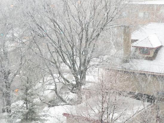 Snow 07FEB2012-1