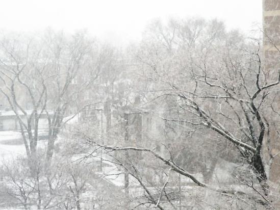 Snow 07FEB2012-2