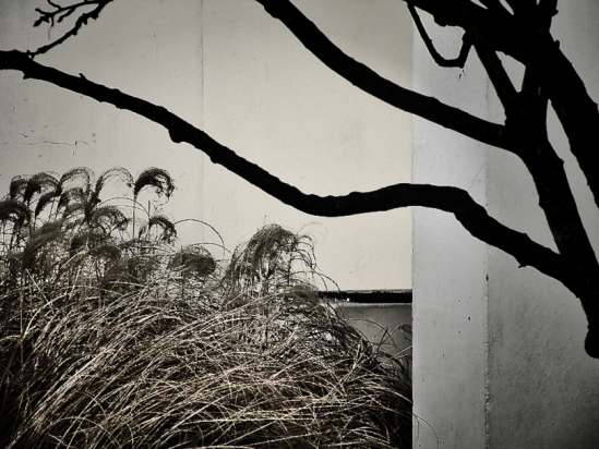 Wintergrass-1