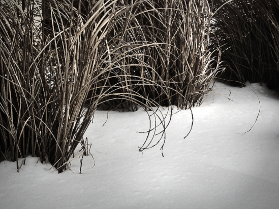 Wintergrass-3