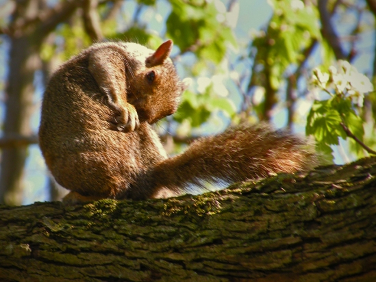 Squirrel Grooming-1